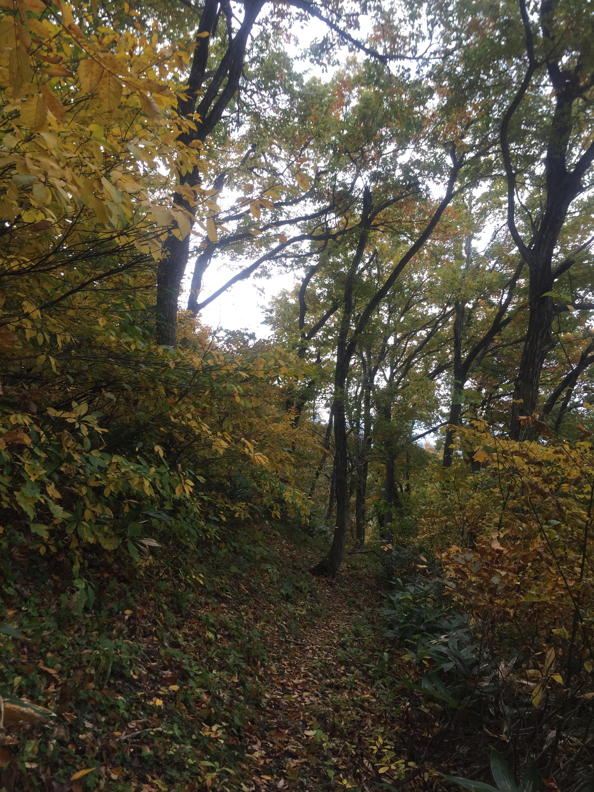 二ツ森 山形百名山 のぼり滝 登山道