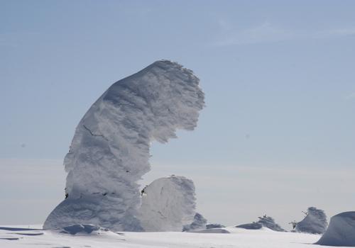 蔵王 樹氷 スノーモンスター 写真