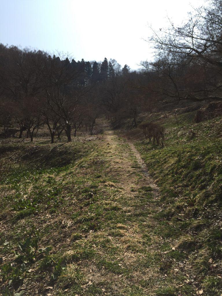 舞鶴山 山形百名山 登山道