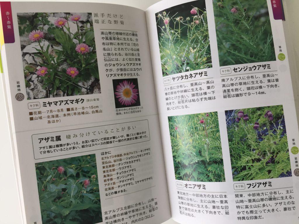 高山植物 図鑑 アザミ