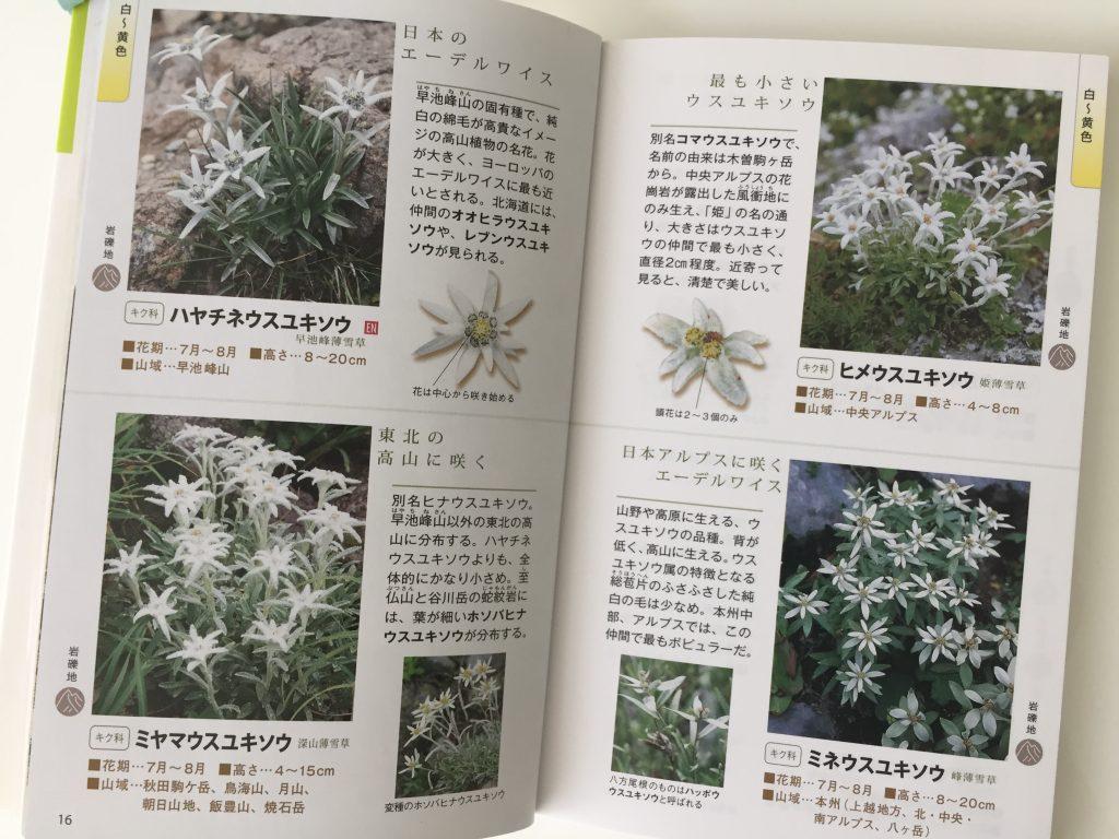 高山植物 図鑑 ウスユキソウ