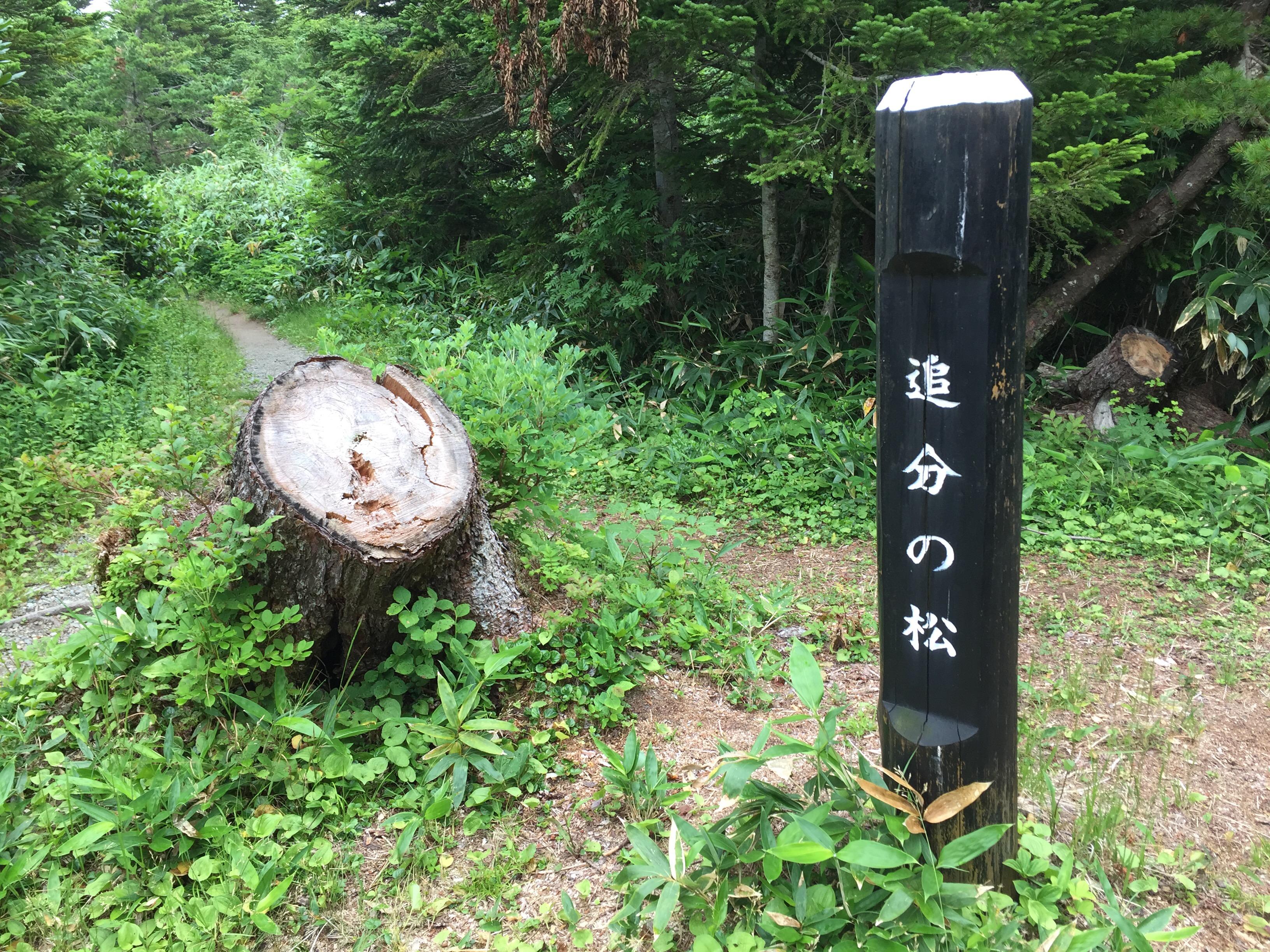 蔵王 熊野岳 日本百名山 山形百名山 登山道 追分の松
