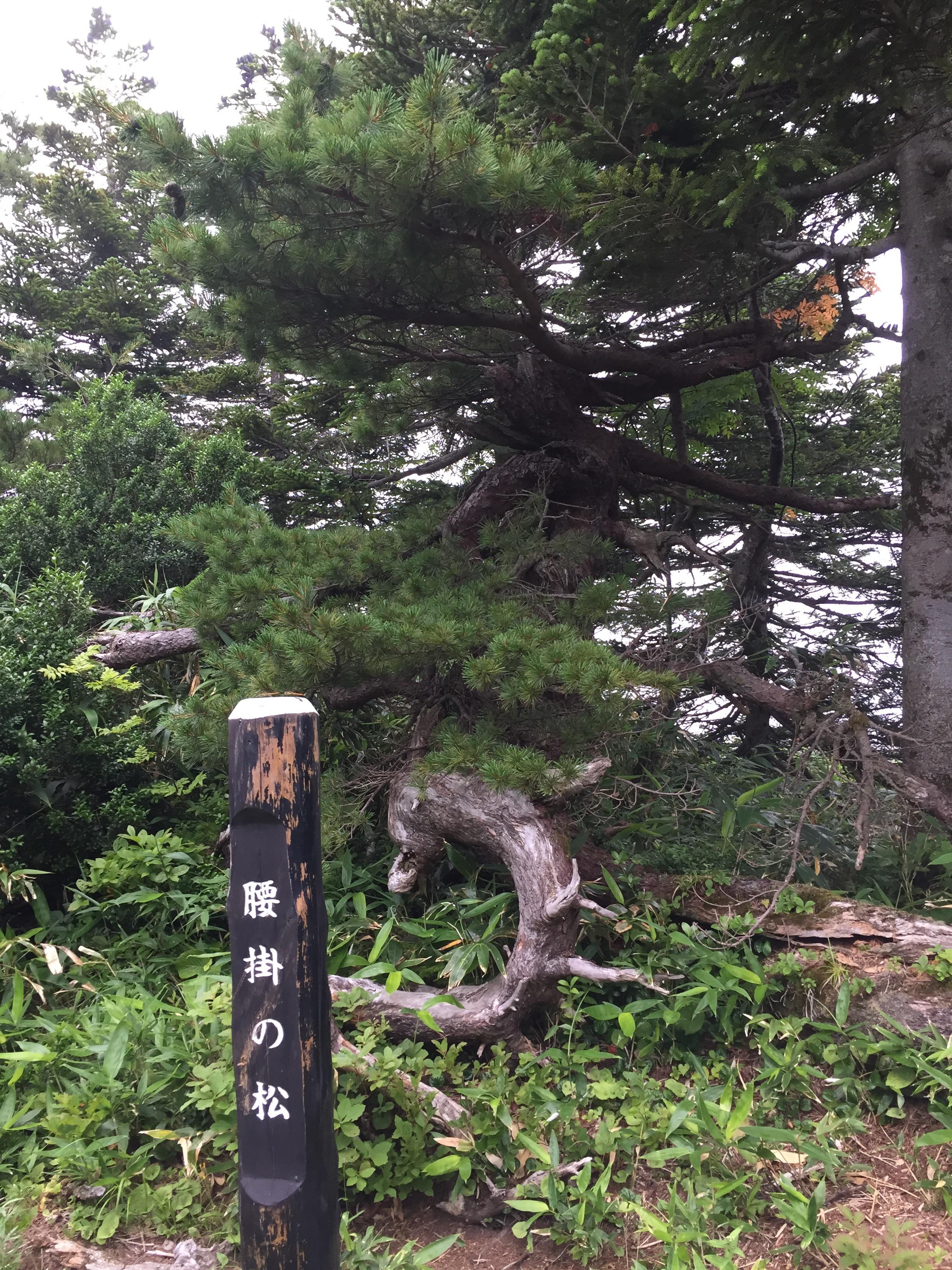 蔵王 熊野岳 日本百名山 山形百名山 登山道 腰掛の松