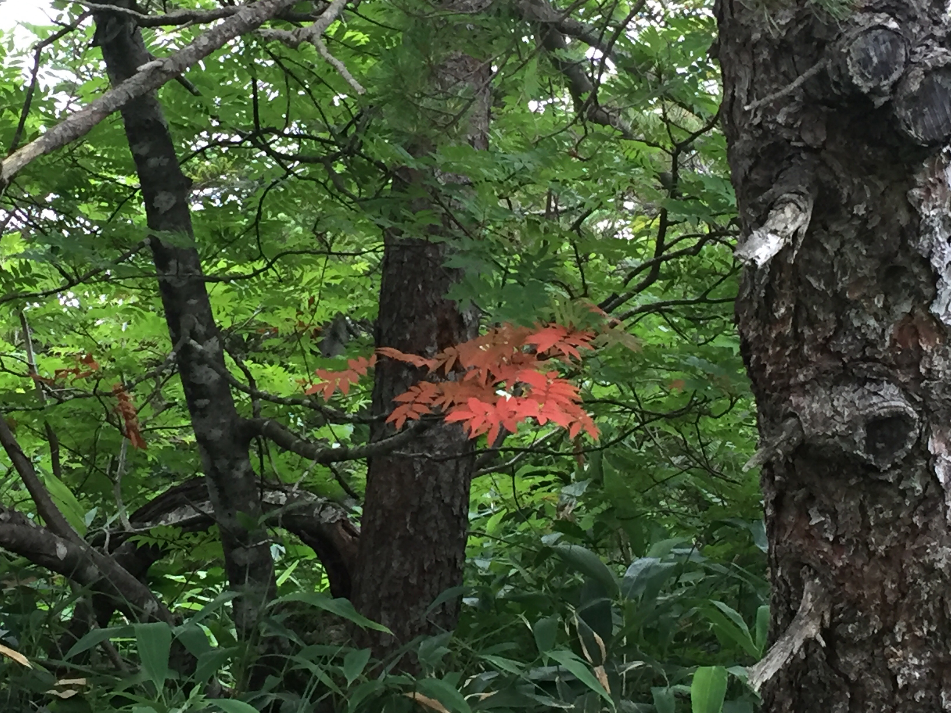 蔵王 熊野岳 日本百名山 山形百名山 登山道 紅葉