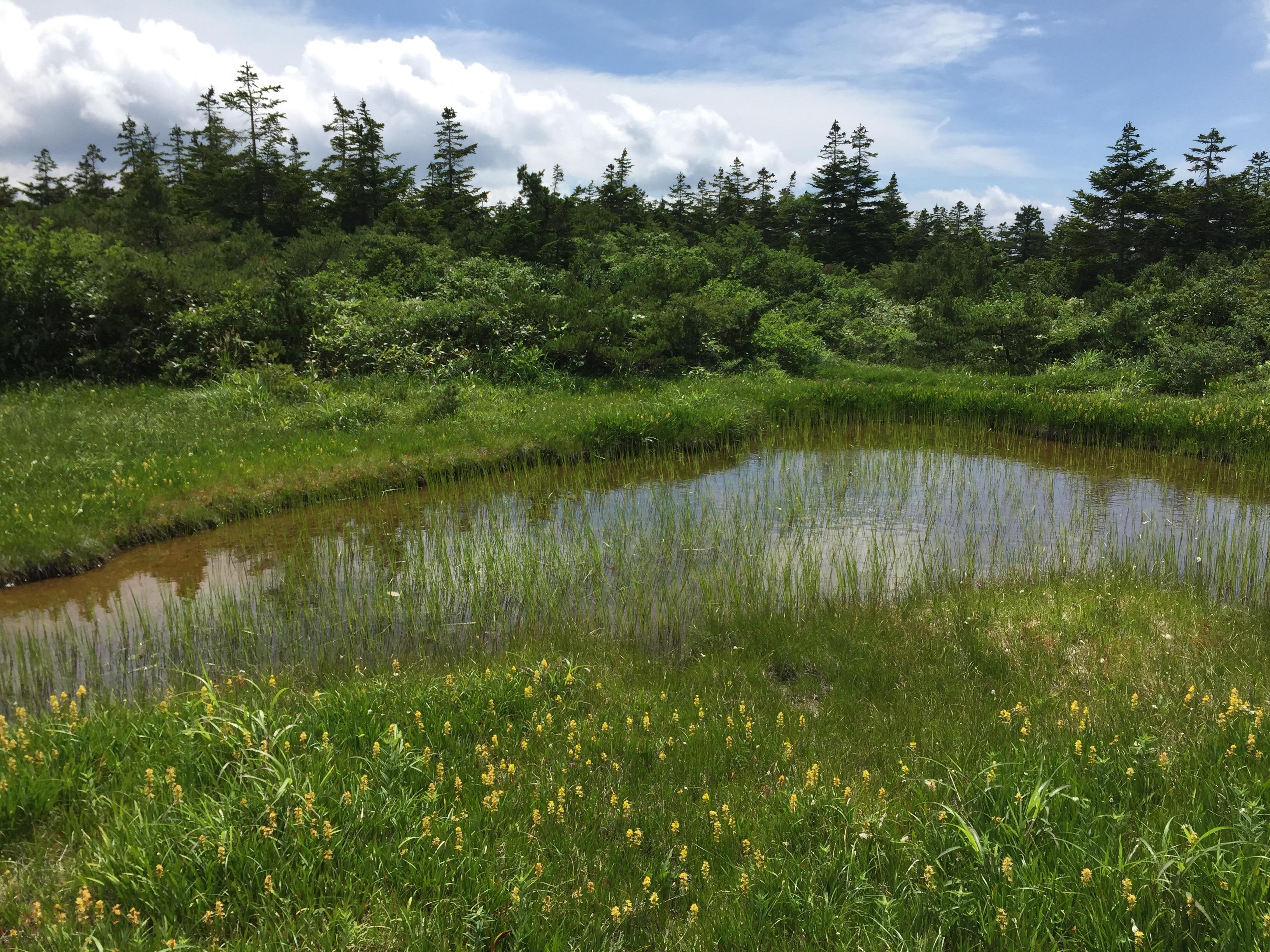 蔵王 熊野岳 日本百名山 山形百名山 登山道 いろは沼