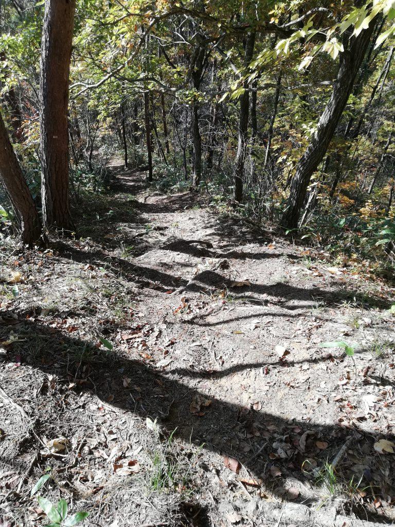 高取山 山形百名山 登山道 心臓破りの坂