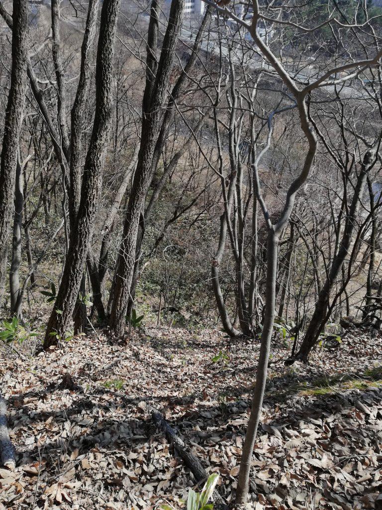 愛宕山 登山道