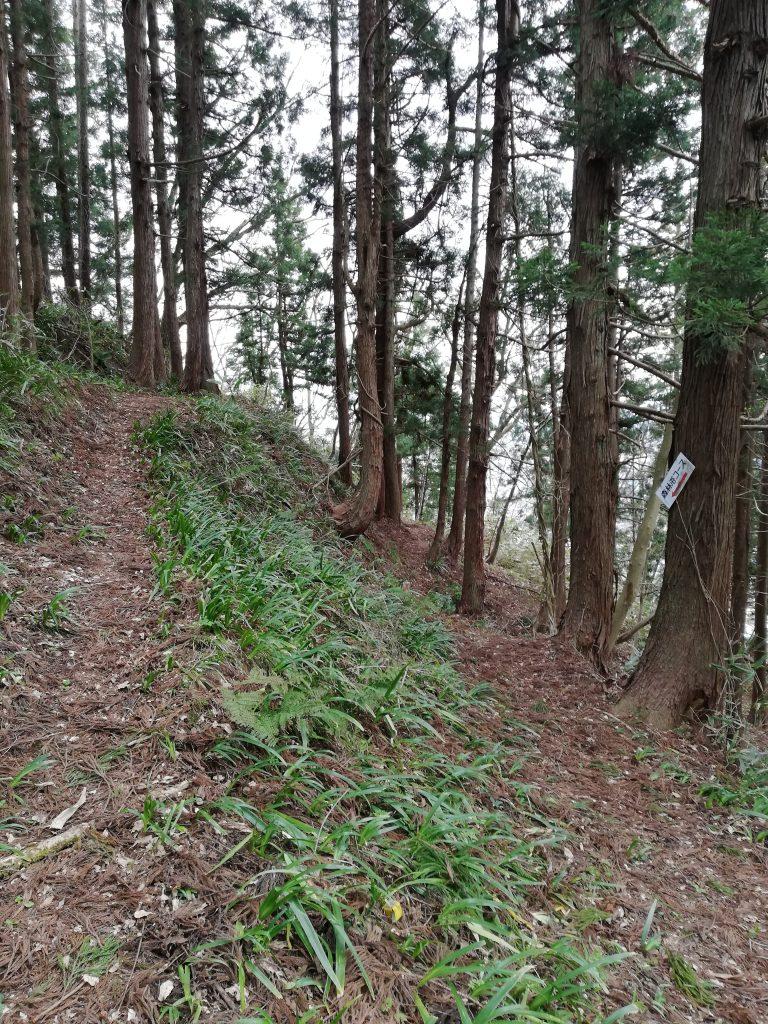 楯山 山形百名山 登山道