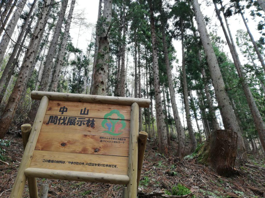白鷹山 山形百名山 中山間伐展示林